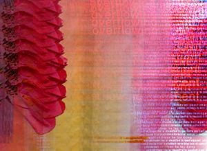 KS, Flowers (Lush Red), 2001. Digital Image
