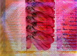 KS, Flowers (Cascading), 2001. Digital Image