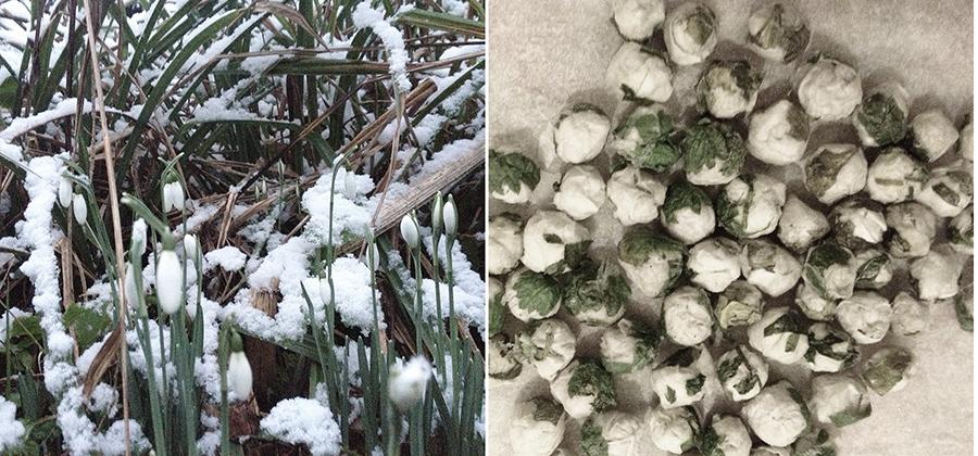 Snowdrops and mugwort triptych, 2013. Digital Image