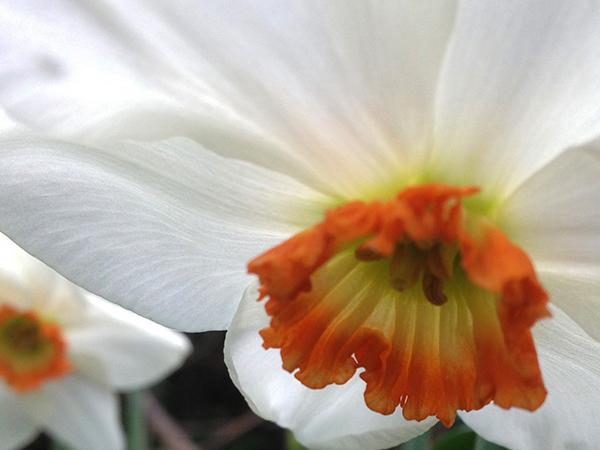 Spring_Equinox_web.jpg
