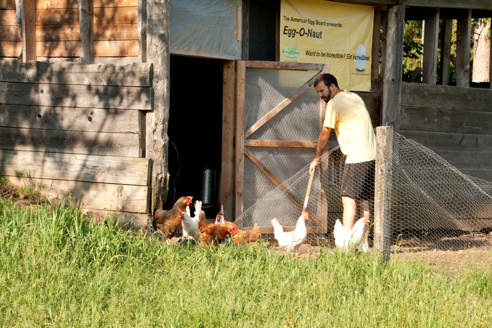 Converting a run down old barn into a chicken coop.