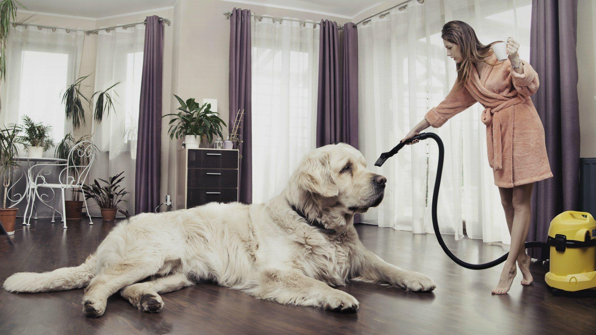 Animals___Dogs_The_hostess_vacuuming_dog_094319_.jpg