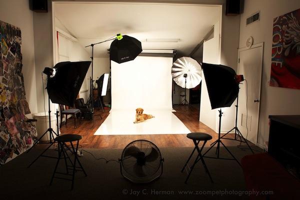 pet_photography.jpg