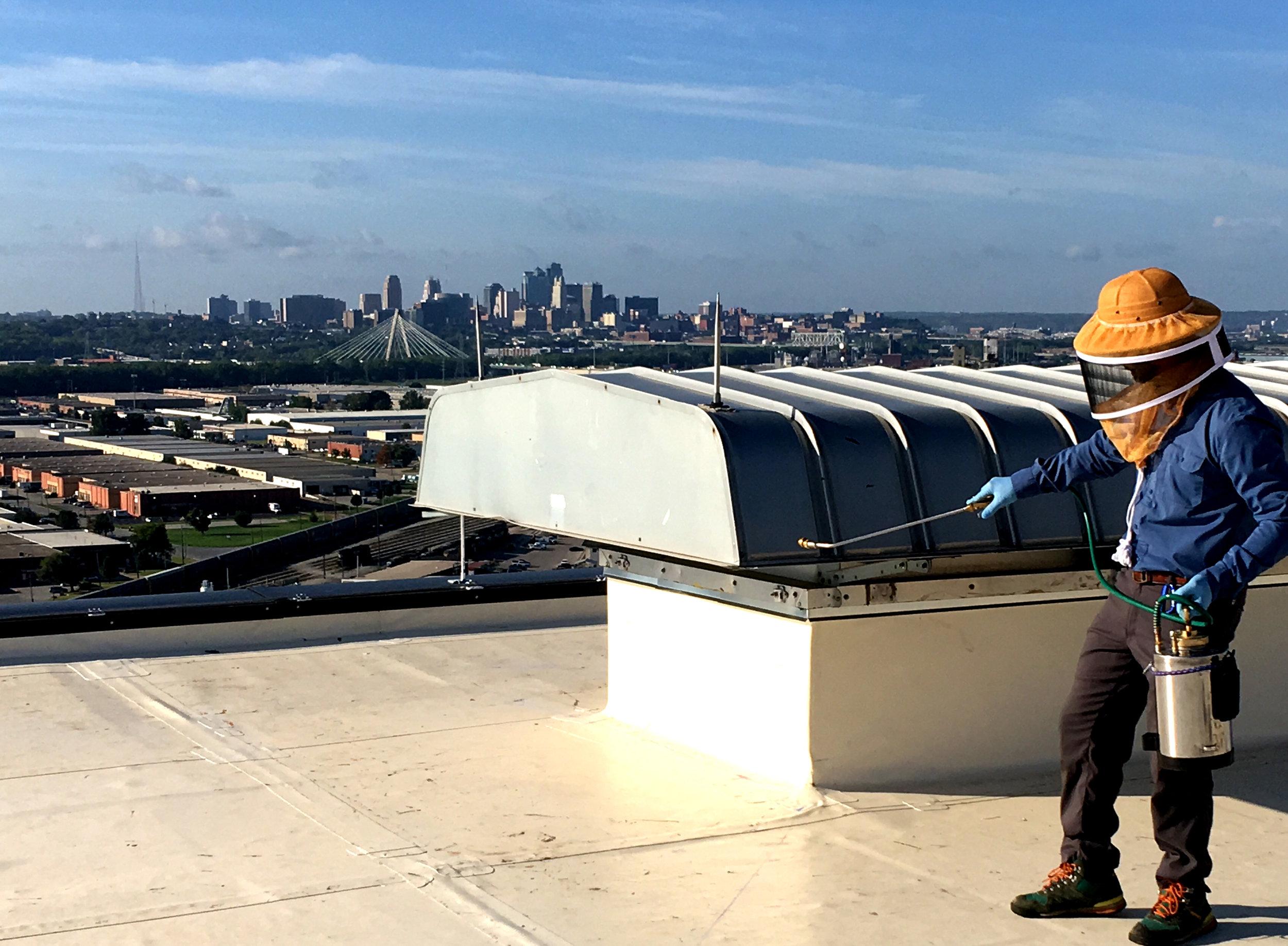 bugmeister roof.jpg