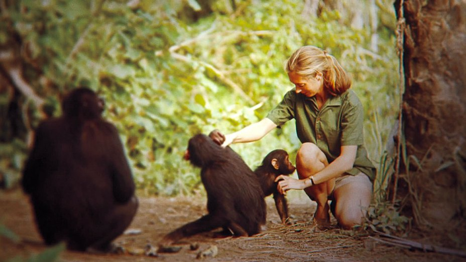- The Jane Goodall InstituteJoin Danny in honouring the great Jane Goodall for her 85 birthday party.