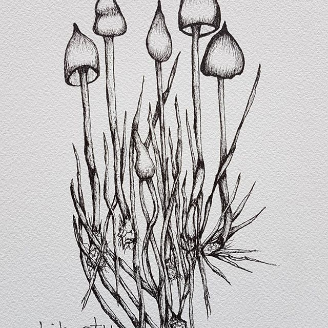 Working on some new #penandink .  Can you tell that I like #mushrooms ?  Lol.  #whitbyartist #nature