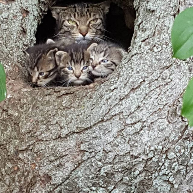 Mama and her babies in a safe place. #cats , #kittens