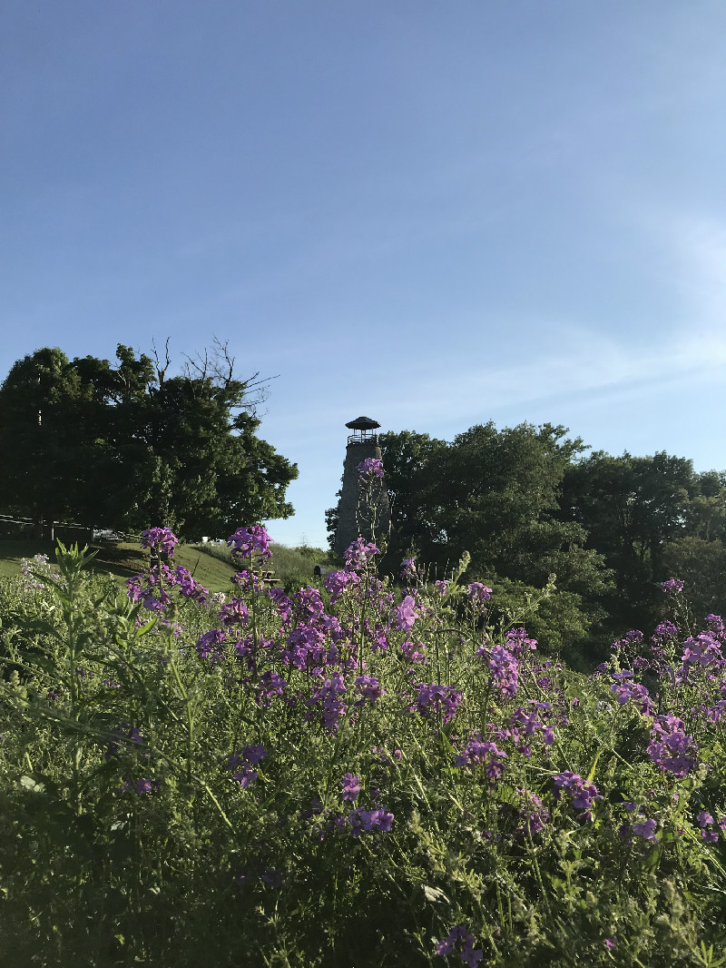 Barcelona Lighthouse with purple flowers in foreground near Westfield, NY