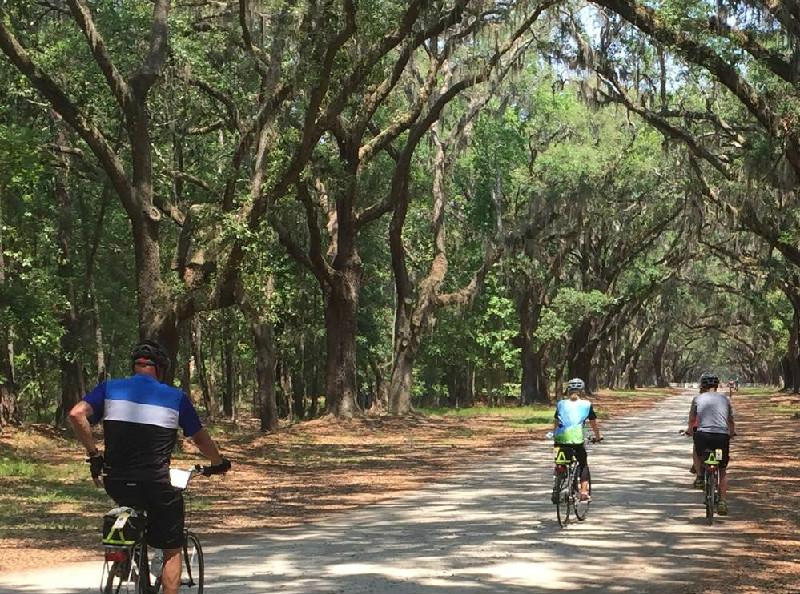 Wormsloe Plantation bike riders in Savannah, GA