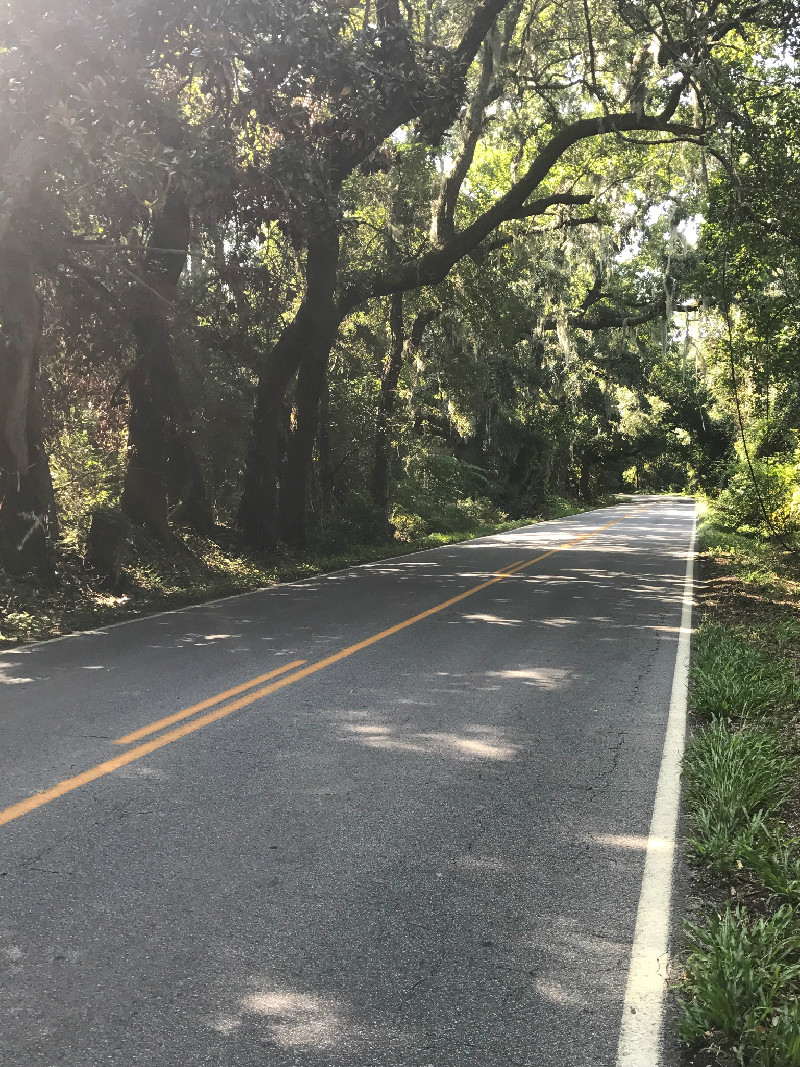 Oak tree canopied road near Charleston, SC