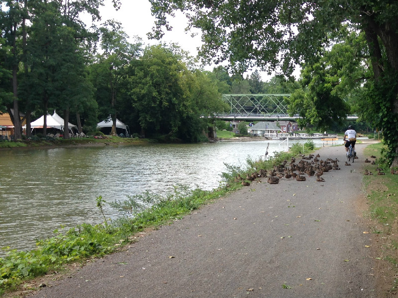 Erie Canal path biker navigating around ducks near Bushnell's Basin, NY