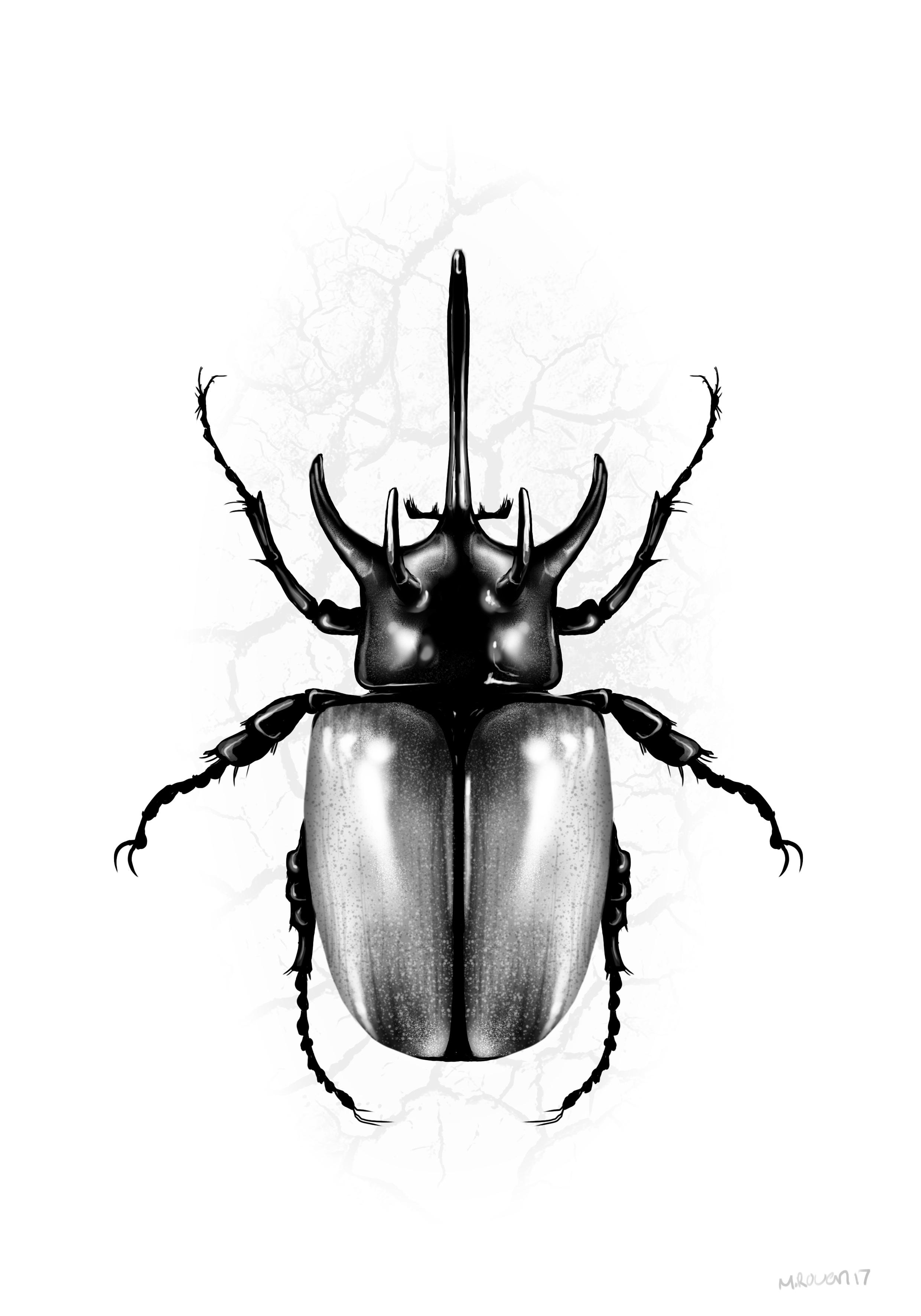 dung_beetle copy.jpg