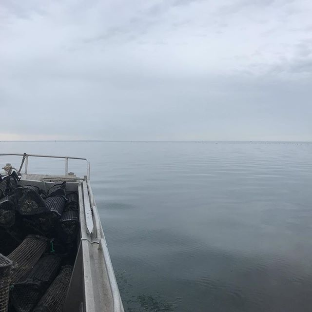 All shades of grey this morning #yorkepeninsula #oysterfarm #oysters #deckieforaday #workingonsaturday
