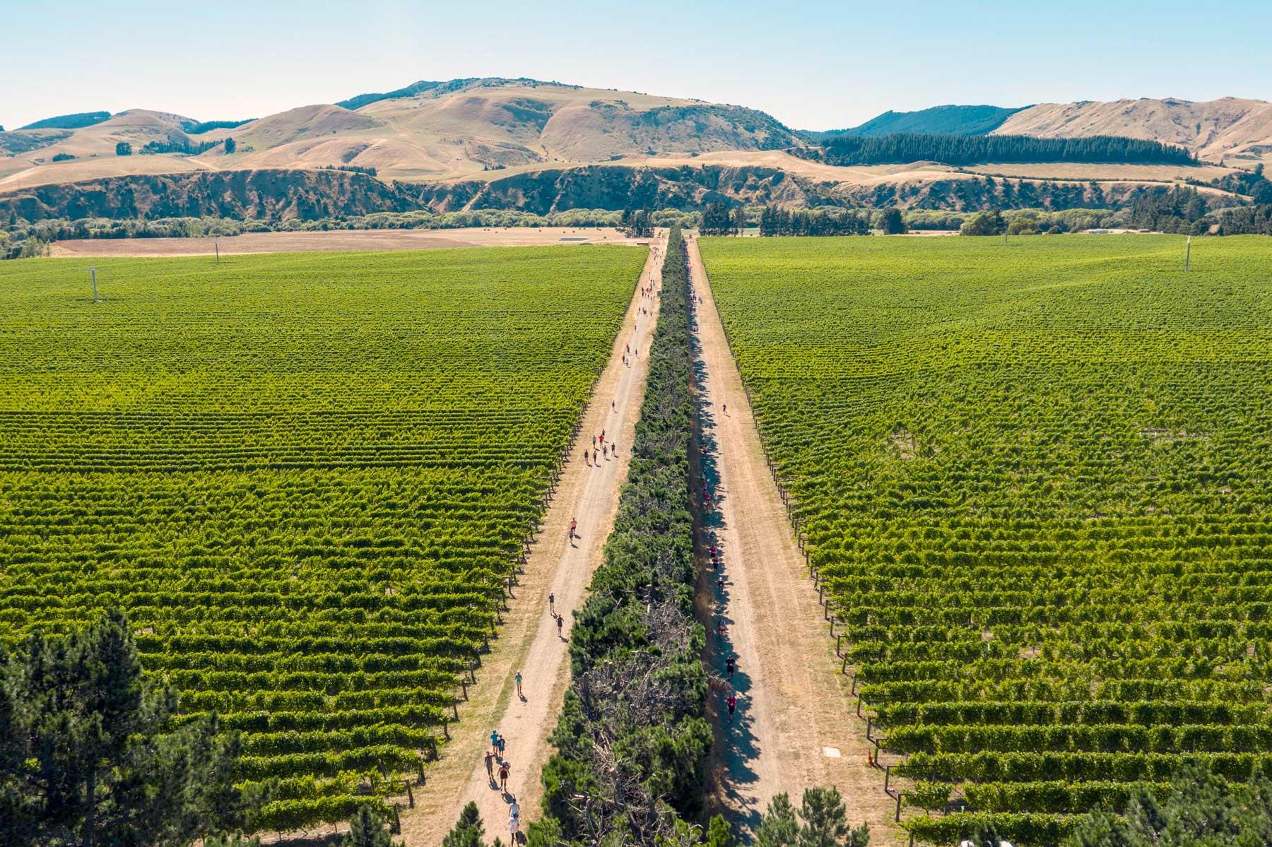 vine-run-aerial-2019.jpg