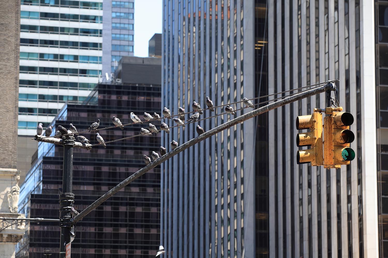 U.S.A. / New York