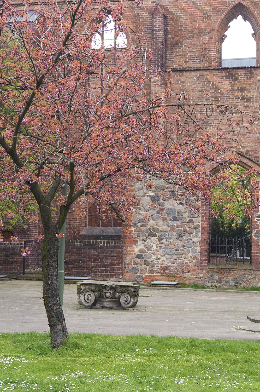 Germany / Berlin / Franciscan Monastery
