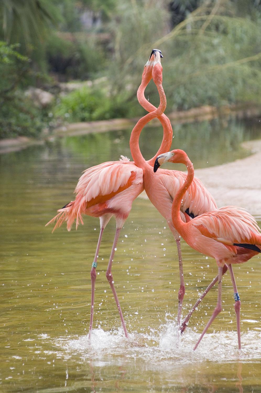 Germany / Berlin / Berlin Zoological Garden