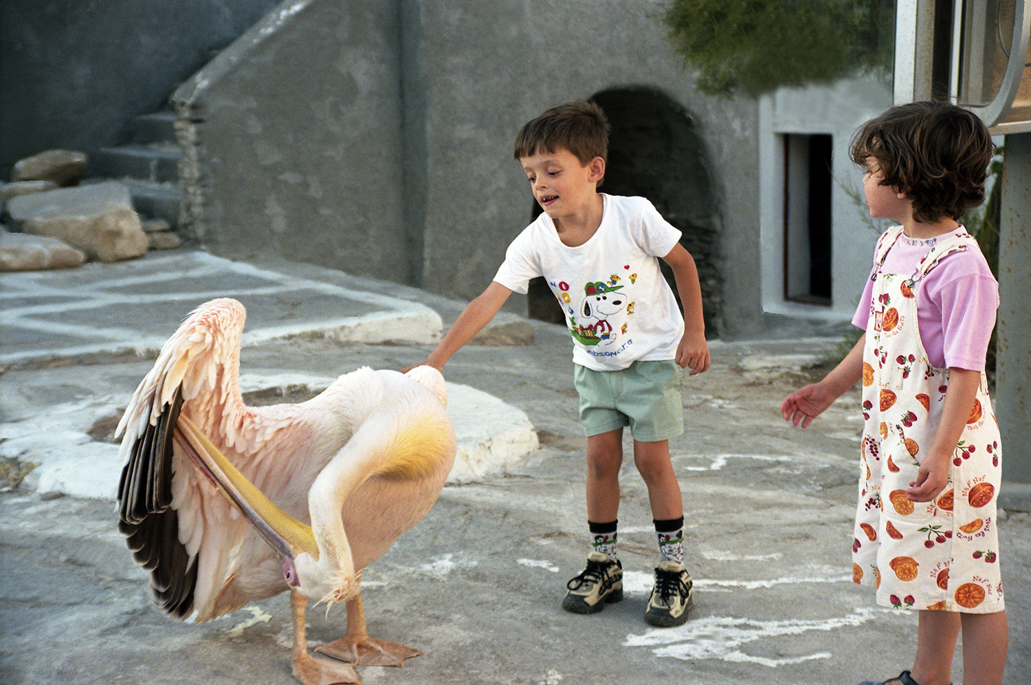 Greece / Mykonos / The Pelican