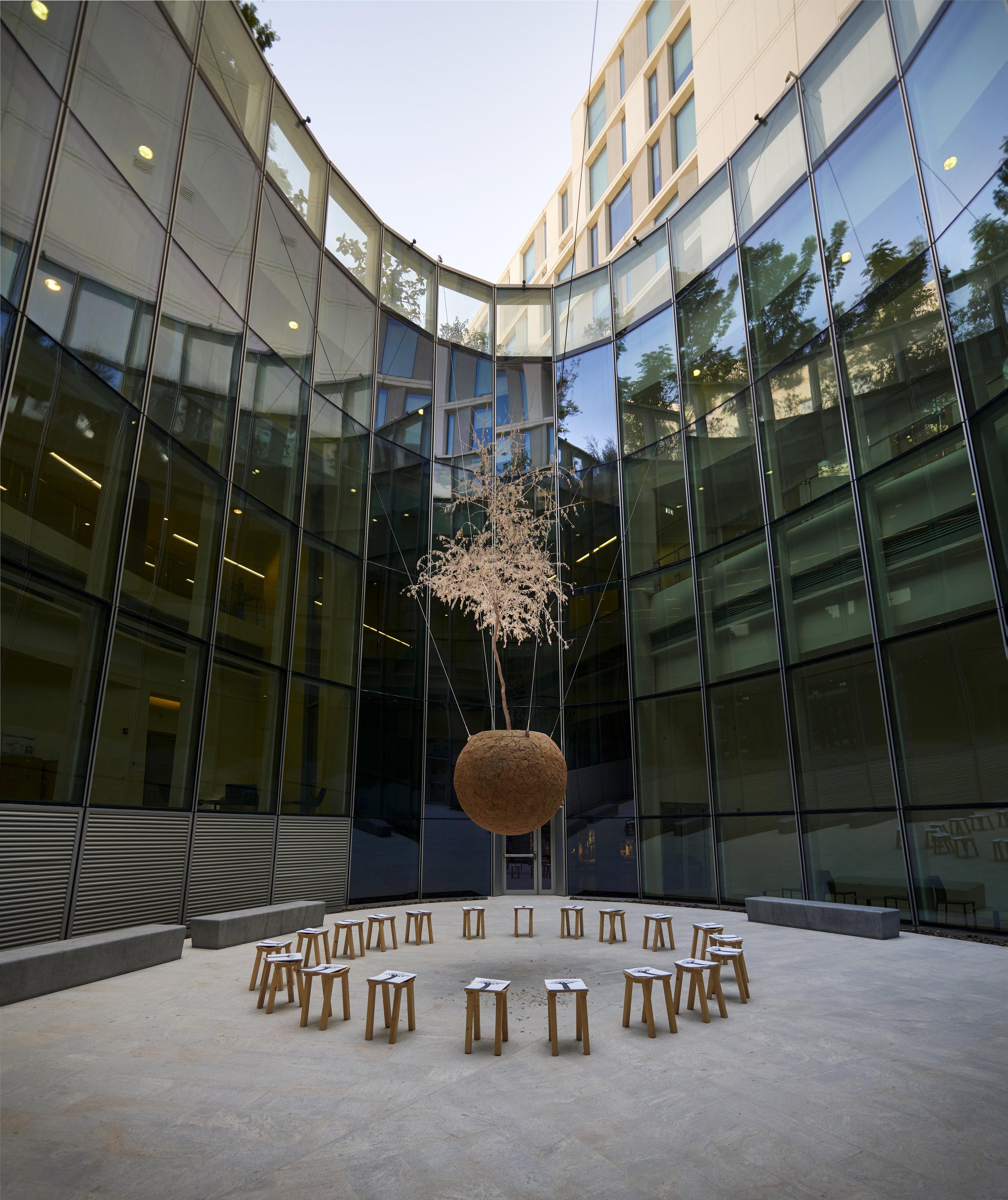 Sandi Hilal and Alessandro Petti. Mujawara / The Tree School ,2014 – 2018. Stools, Ghaf tree. Courtesy of the Artists and NYU Abu Dhabi Art Gallery. Image by John Varghese