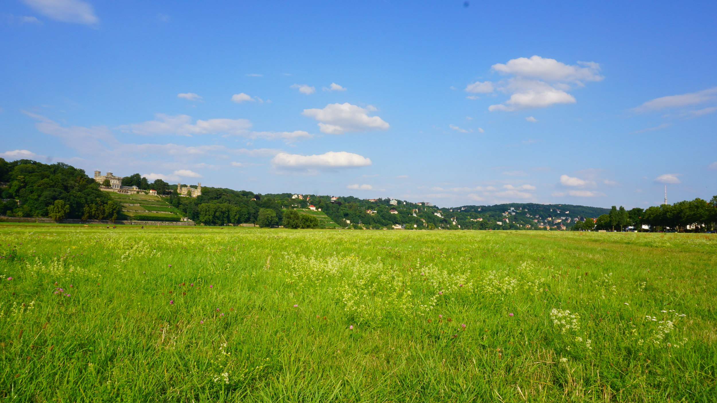 Elbe Meadow.JPG