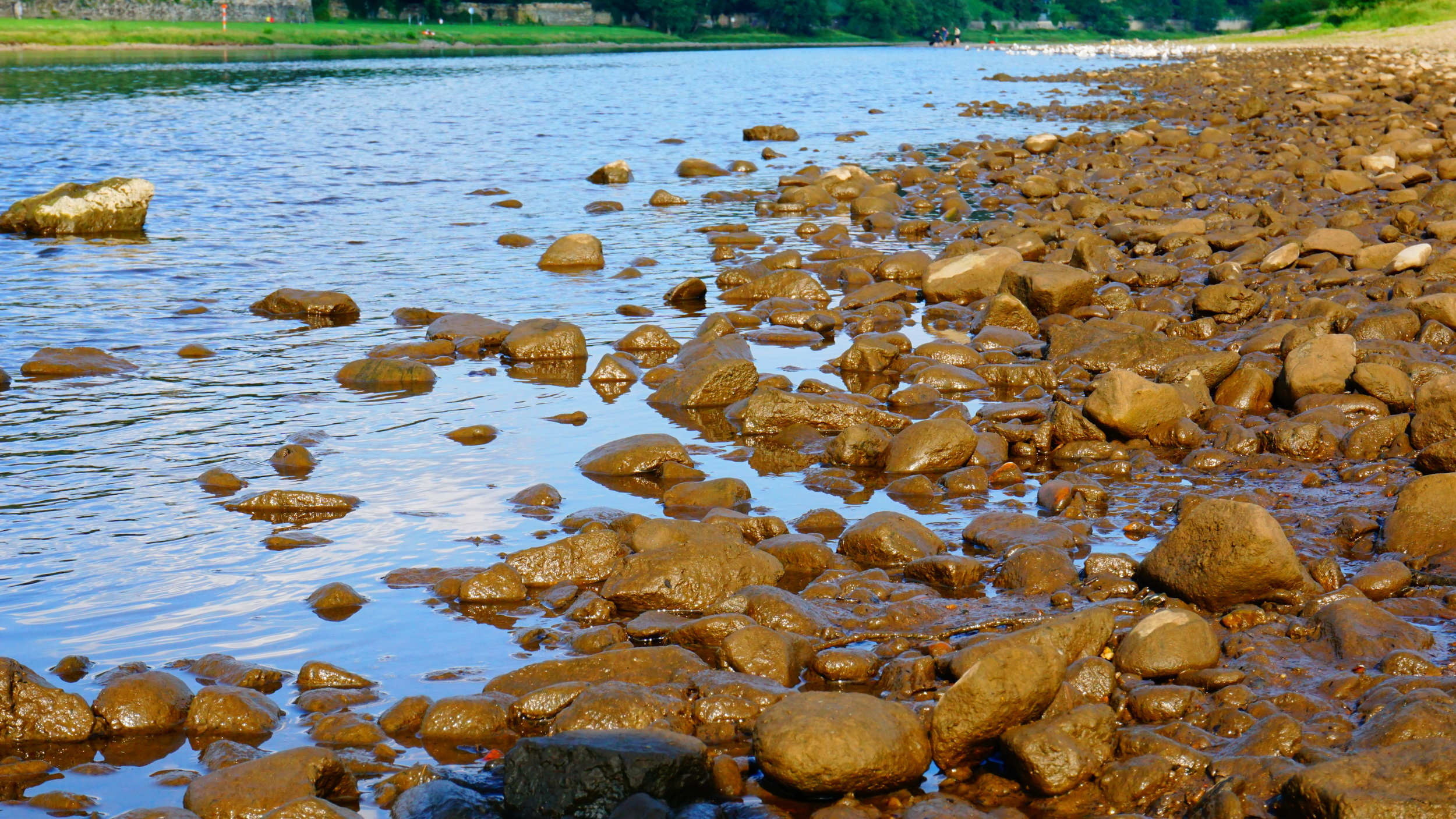 Elbe River Shore 1.JPG