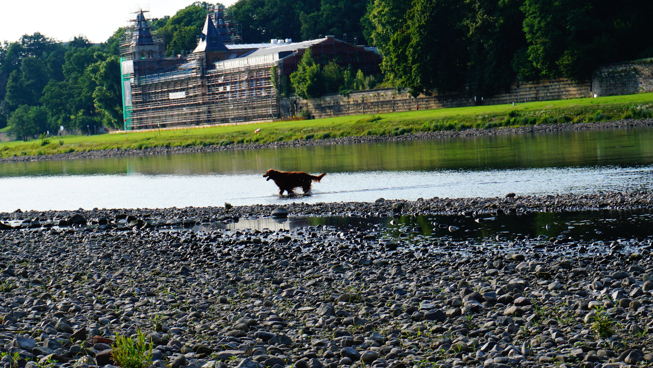 Dog in the Elbe.JPG