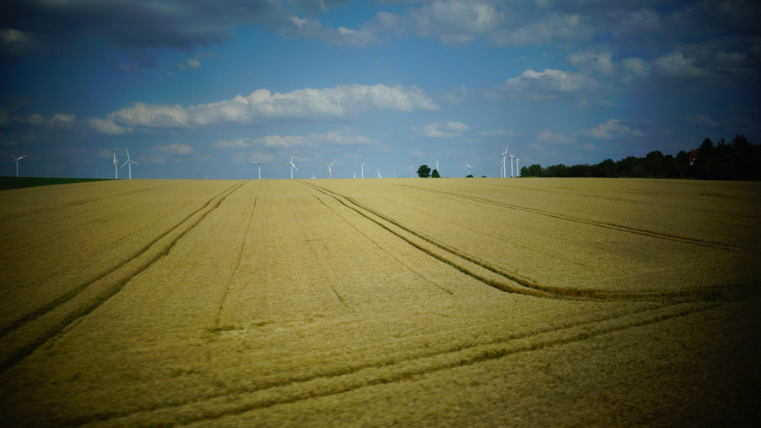 Fields of Wheat.JPG