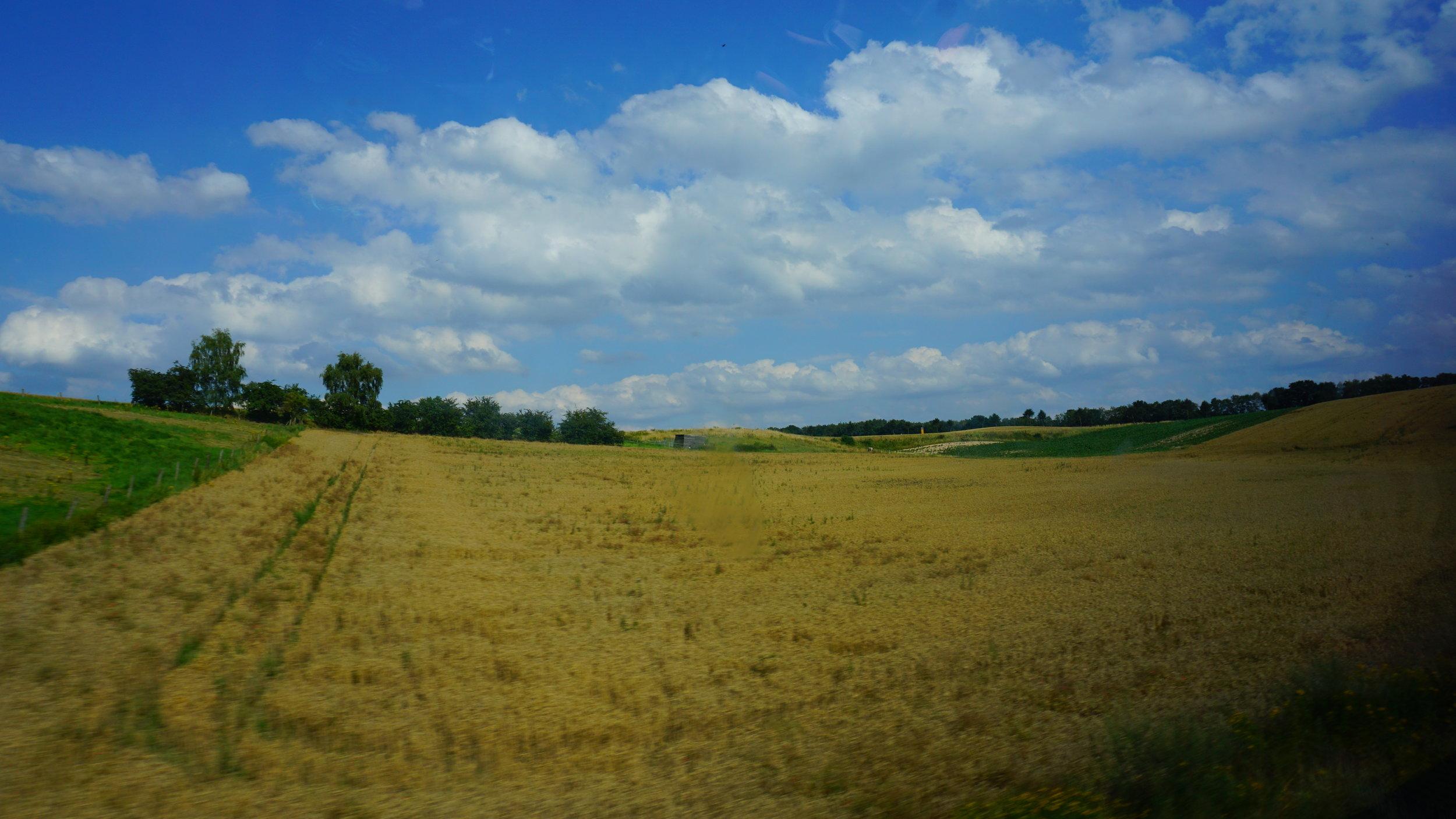 Fields of Wheat 2.JPG