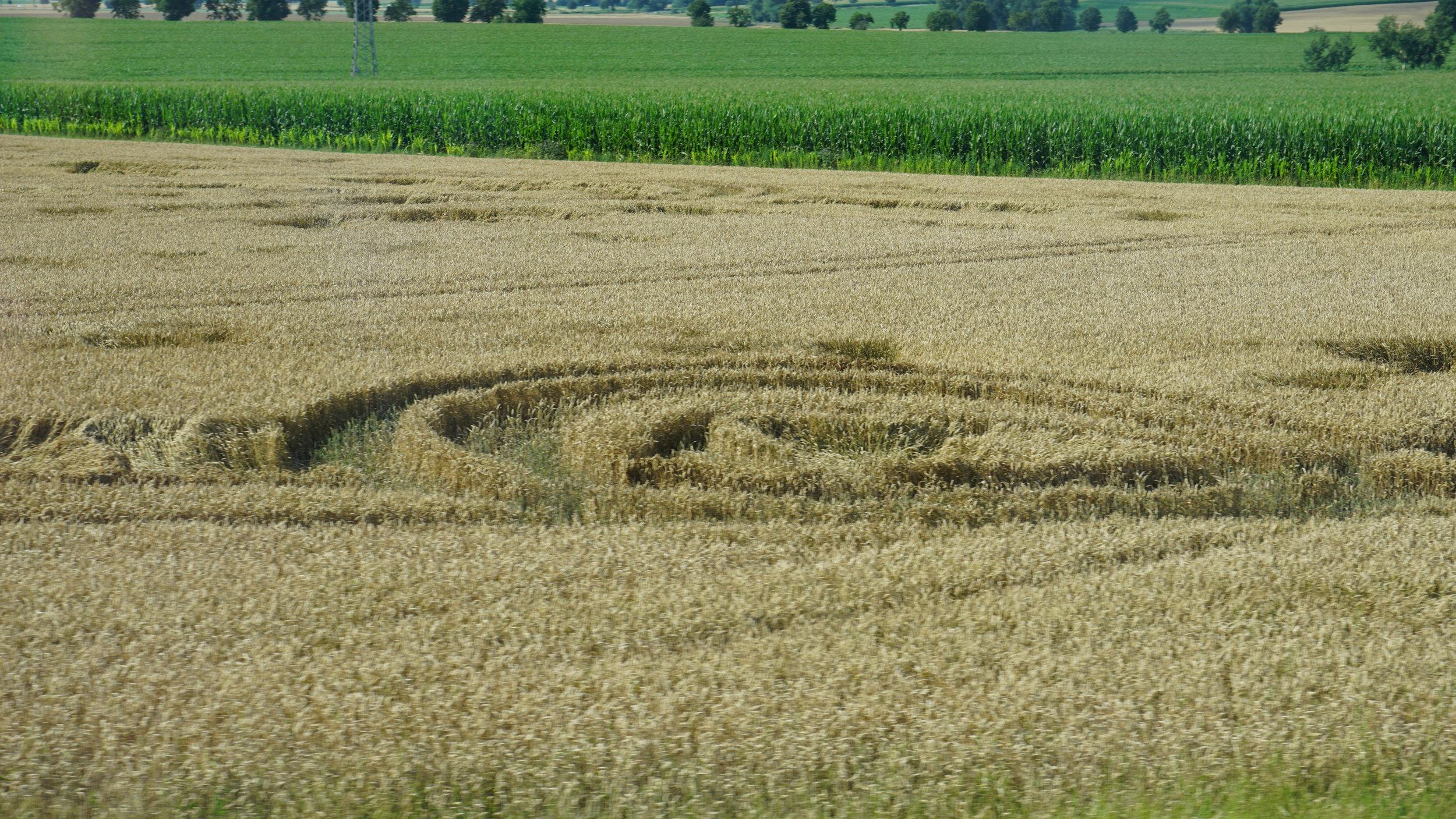 German Crop Circles.JPG