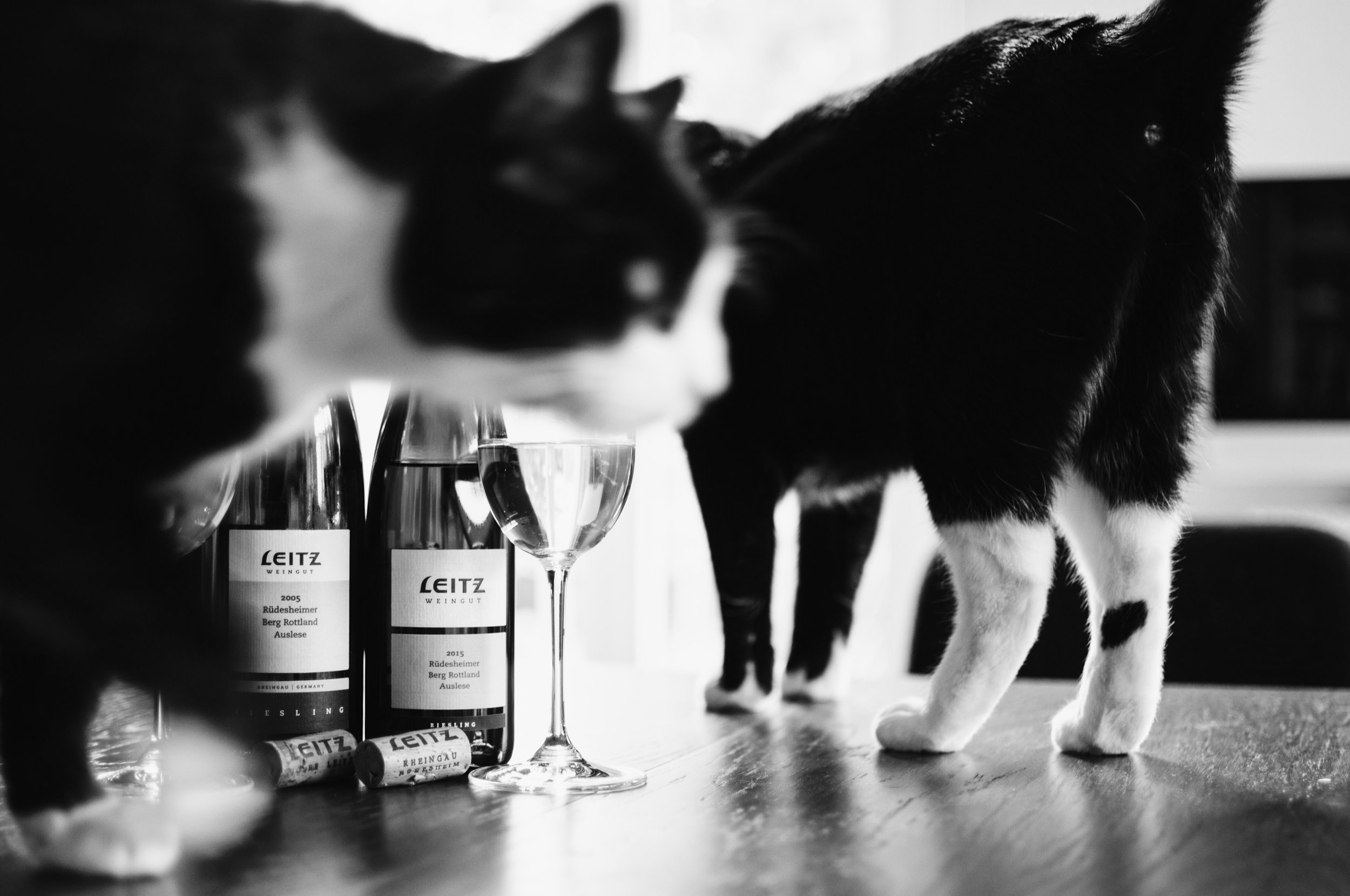 Too curious to not disturb a photo session... Itchy and Scratchy are part of every indoor shooting for Heroes of Riesling.