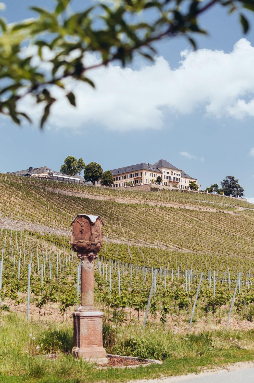 Riesling-Hero-Schloss-Johannisberg-9067.jpg