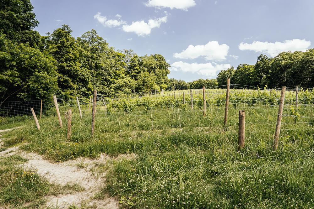 Heroes-of-riesling-Ravines-wine-cellar-05025.jpg