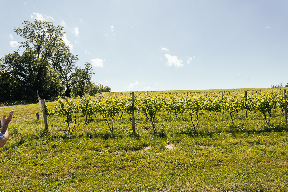 Heroes-of-riesling-Ravines-wine-cellar-04928.jpg