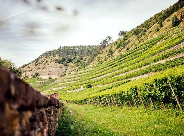 - Werbung - Beautiful Franken 👏😊😍... #beautiful #vineyard #walking #winewalk #winetour #tour #weekend #weekendvibes #picoftheday #pic #takingatour #instawine #winestagram #beautifulview #beautifulplace  #vineyards #weinberg #wein #vino #wine #wineo #nature #enjoylife #love #summer #summertime @wine_tourism @winetouristmag @mywinetours @winetourbooking @tour_insta @epicureanwinetours @winetourer @wineteller @wines_of_germany @winelicious_ @winerylovers @winedestinations