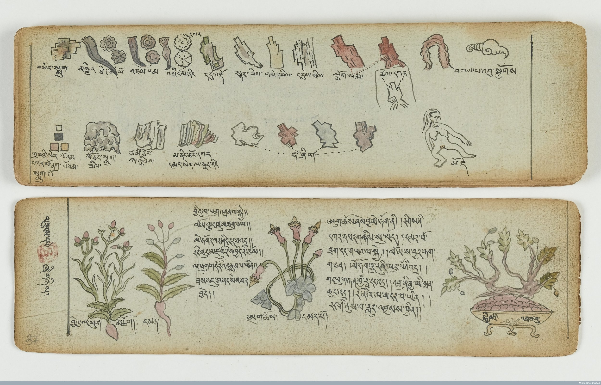 Illustrated Medical Simples of the Four Tantras, Tibeto-Mongolian manuscript, ink and watercolour on paper, 19th century