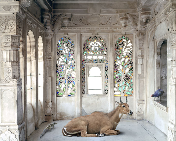 1_Photographer_Karen_Knorr_India_Song_yatzer.jpg