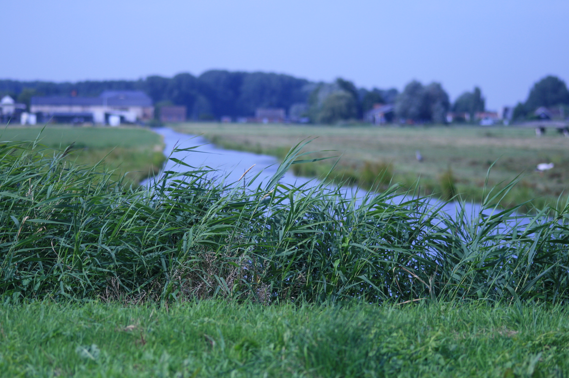 Beautiful Dutch farm land complete with canal