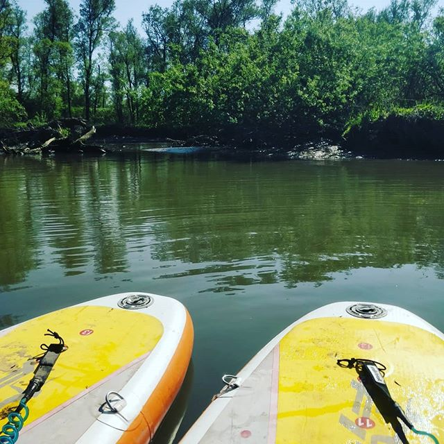 Stand up paddle boarding in the biesbosch with @miguel.cabral.guerra 😍