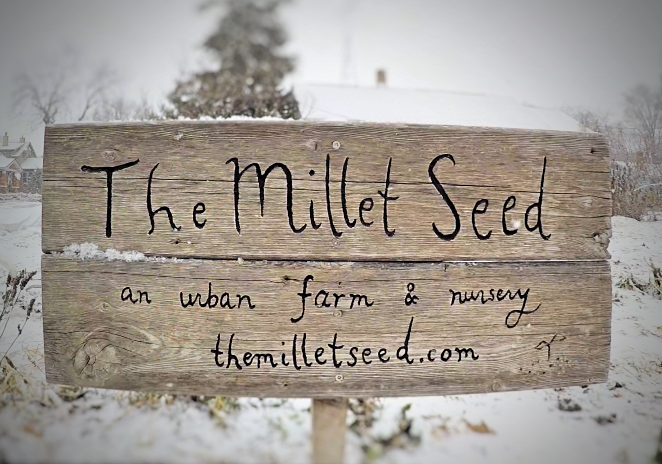 The Millet Seed - IOWA CITY, IAA hyper local in-town veggie CSA bringing organic food to 20+ community members with no-till bed prep and next to zero input from fossil fuels.www.themilletseed.com