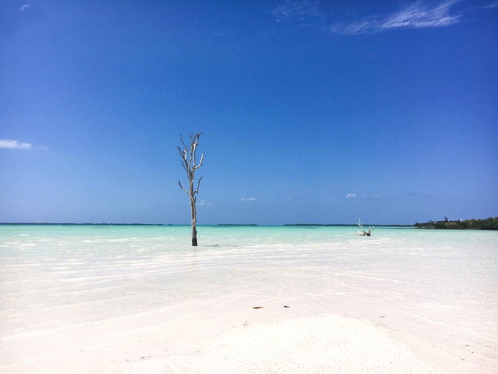 Harbour-Island-Lone-Tree-1-Medium-1.jpg