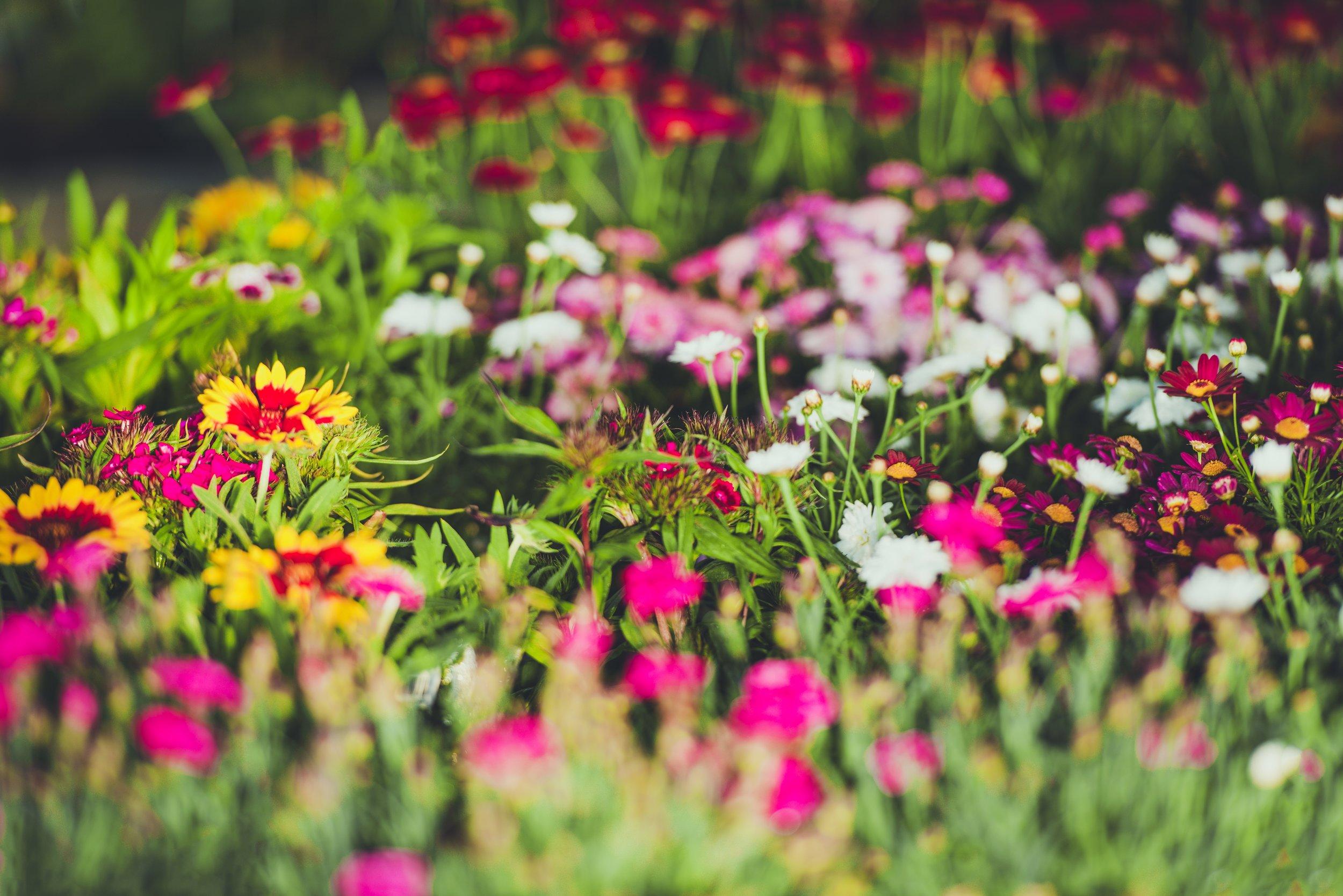 - FLOWER BEDS
