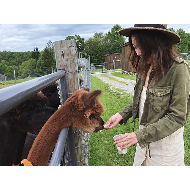 pretty sure it doesn't get better than this #alpacas #buckbrook #upstate #newyork