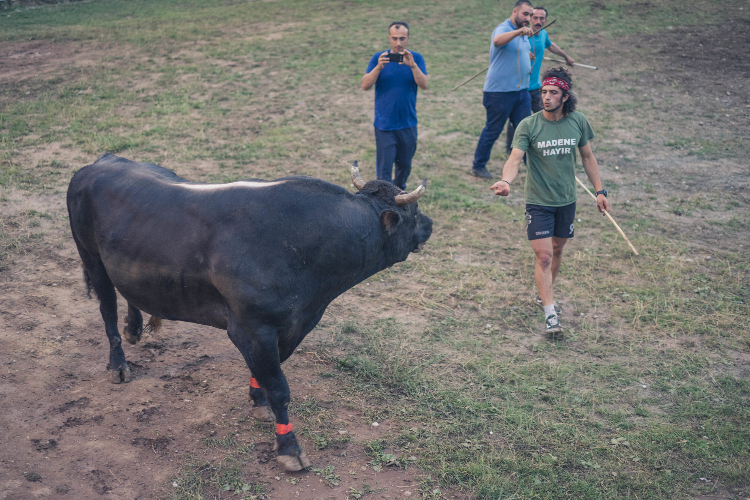1 ton bull, no worries mate, Kafkasör 2018, Artvin