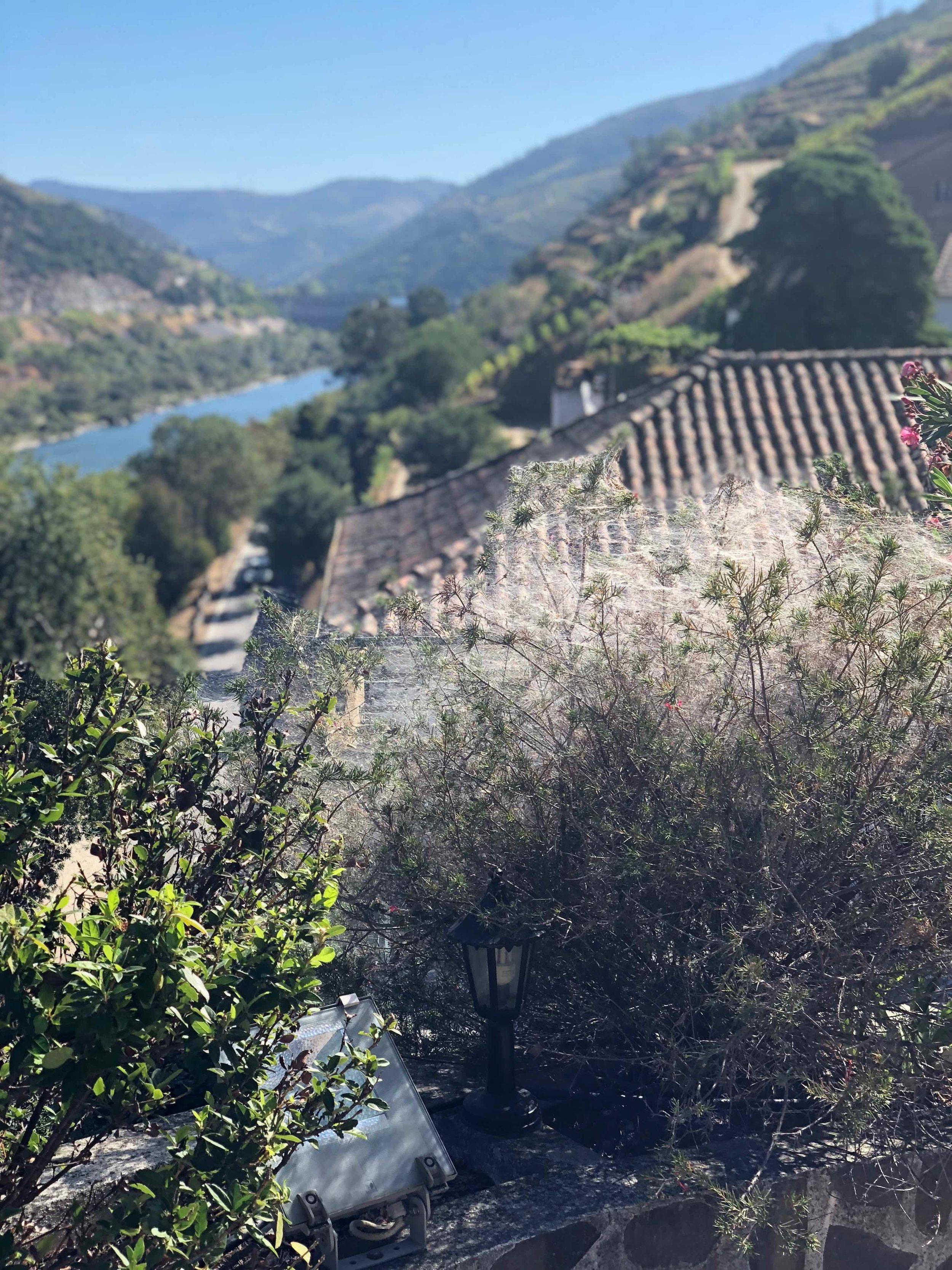 Qunita de Marrocos Douro
