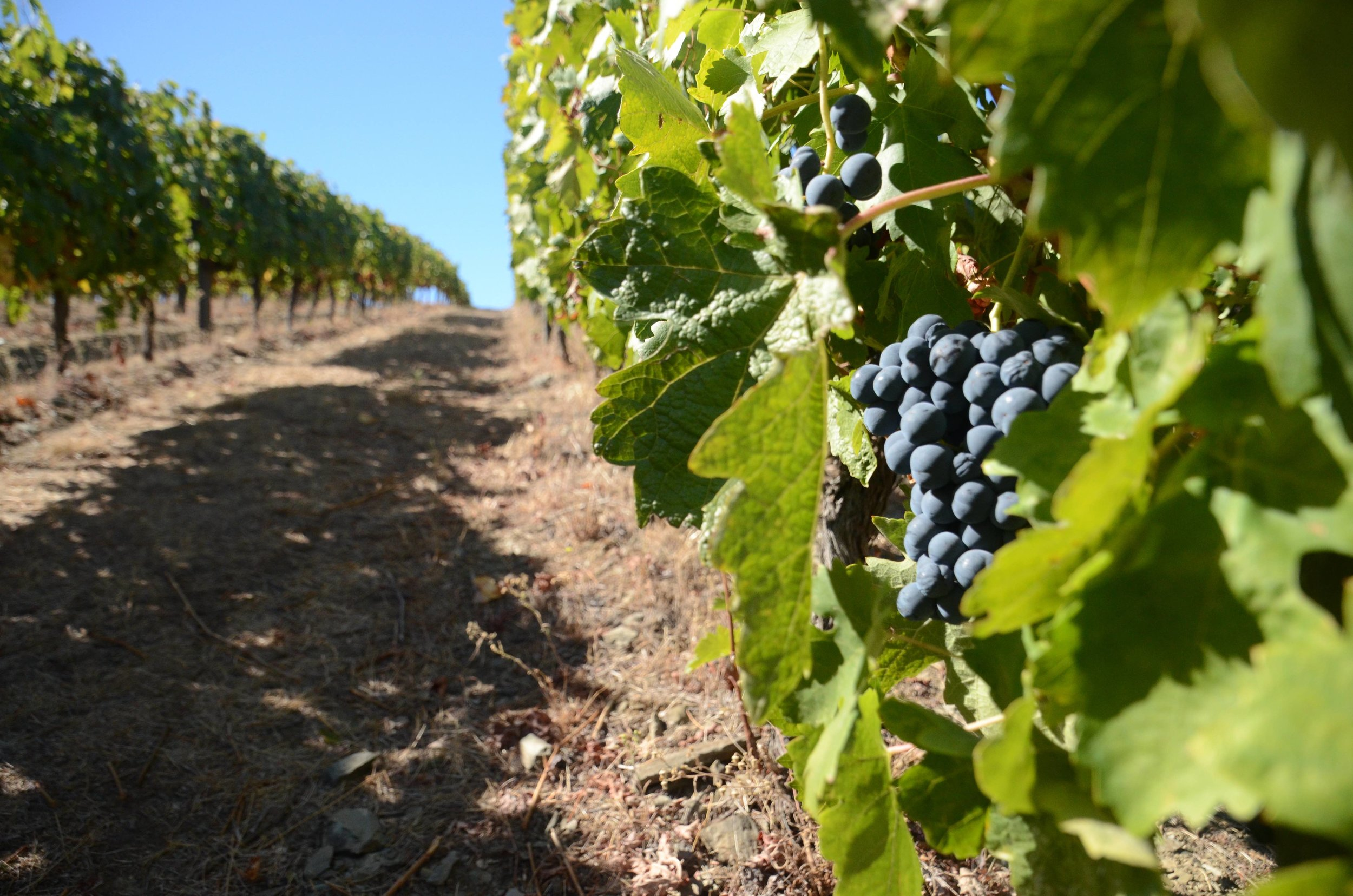 which-wineries-should-I-visit-in-portugal