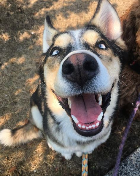 Meet Zola. She never stops smiling.