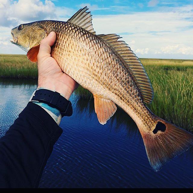 Plan B • • • • #fishing #hopedale #louisiana #redfish #trout #redfishnation #okumafishing #yamahaoutboards #powerpole #minnkota #cca #ccanational #joincca #outhere #gooutside #gofish #eatwhatyoukill #taglouisiana #tagandrelease #saltlife #saltwaterfishing #marsh #nolafishing #hopedalemarina #gopro #lakeborgne #ohbayby #bluewaveboats @nolafishing @louisianasportsman @bluewave_boats @redfish_nation @redfishdistrict