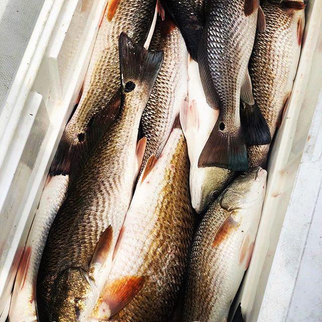 Happy Monday!• • • • #fishing #delacroix #louisiana #redfish #trout #redfishnation #okumafishing #yamahaoutboards #powerpole #minnkota #cca #ccanational #joincca #outhere #gooutside #justgo #gofish #eatwhatyoukill #taglouisiana #tagandrelease #saltlife #saltwaterfishing #marsh #nolafishing #hopedalemarina #gopro #lakeborgne #ohbayby #bluewaveboats @nolafishing @louisianasportsman @bluewave_boats