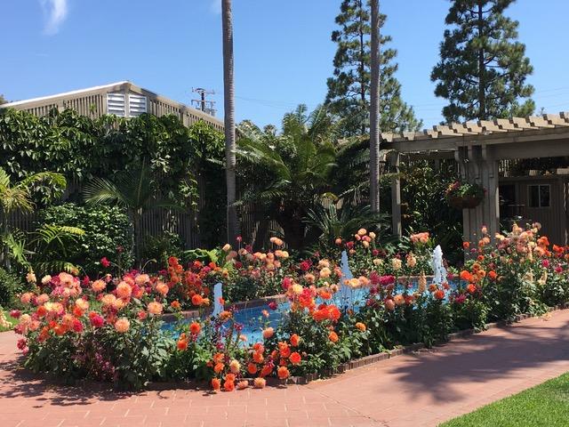 A Garden Oasis Ocd Gardens