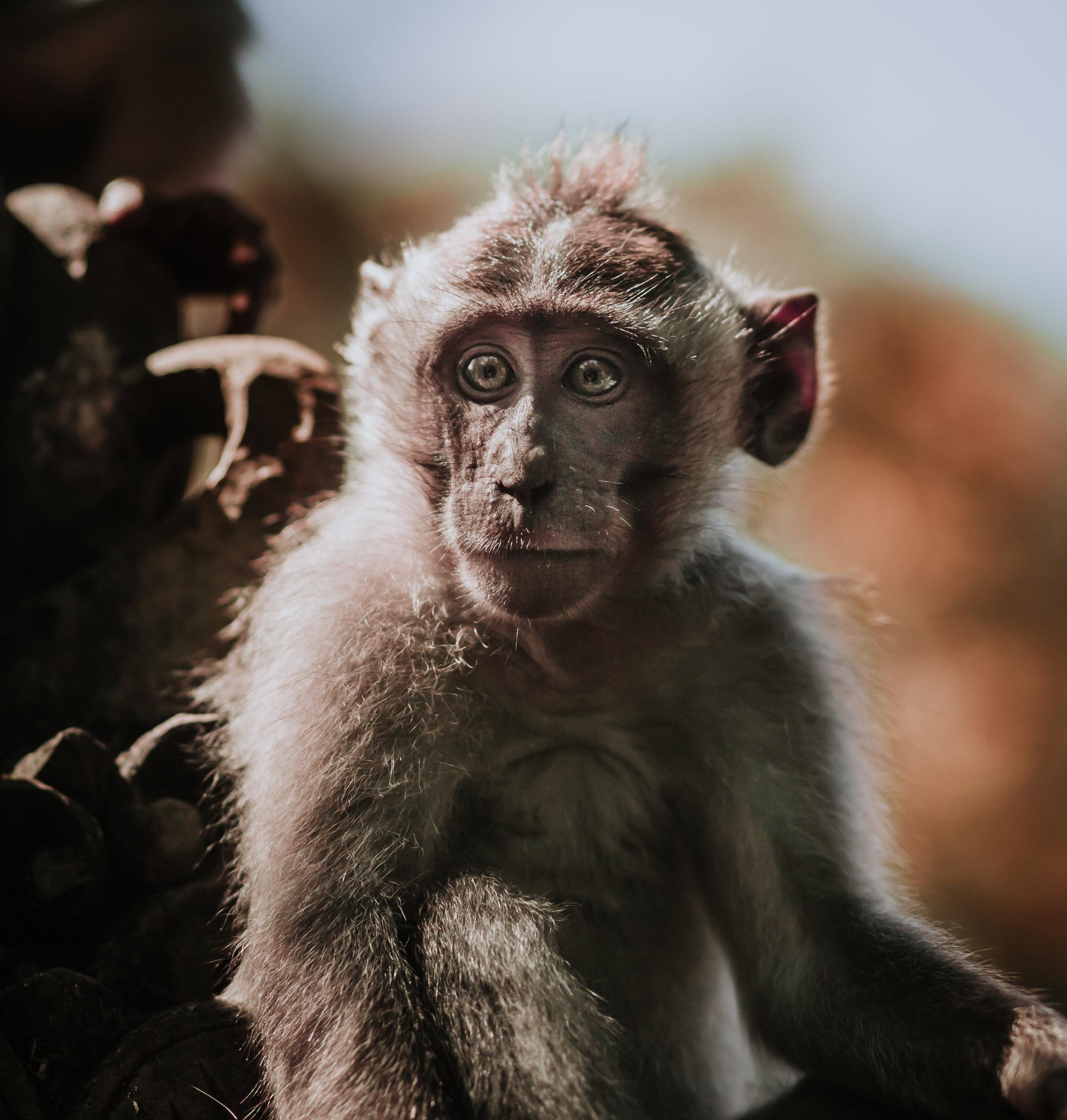 Monkey Final-8789.jpg